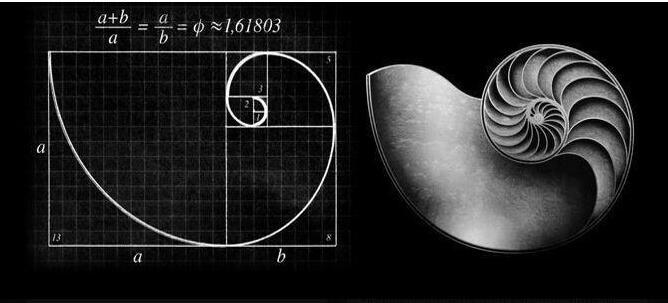 """logo设计中""""黄金螺旋""""的实际应用"""