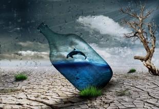 一张融合珍惜水资源、珍惜濒危动物的创意海报