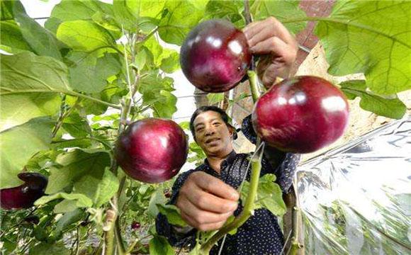农产品品牌营销推广方案